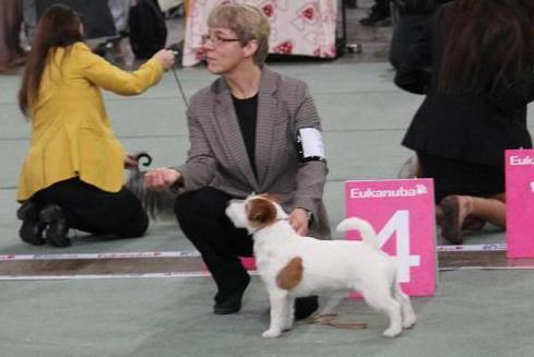 Pluto utstilling Dogs4All